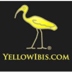 Yellow Ibis